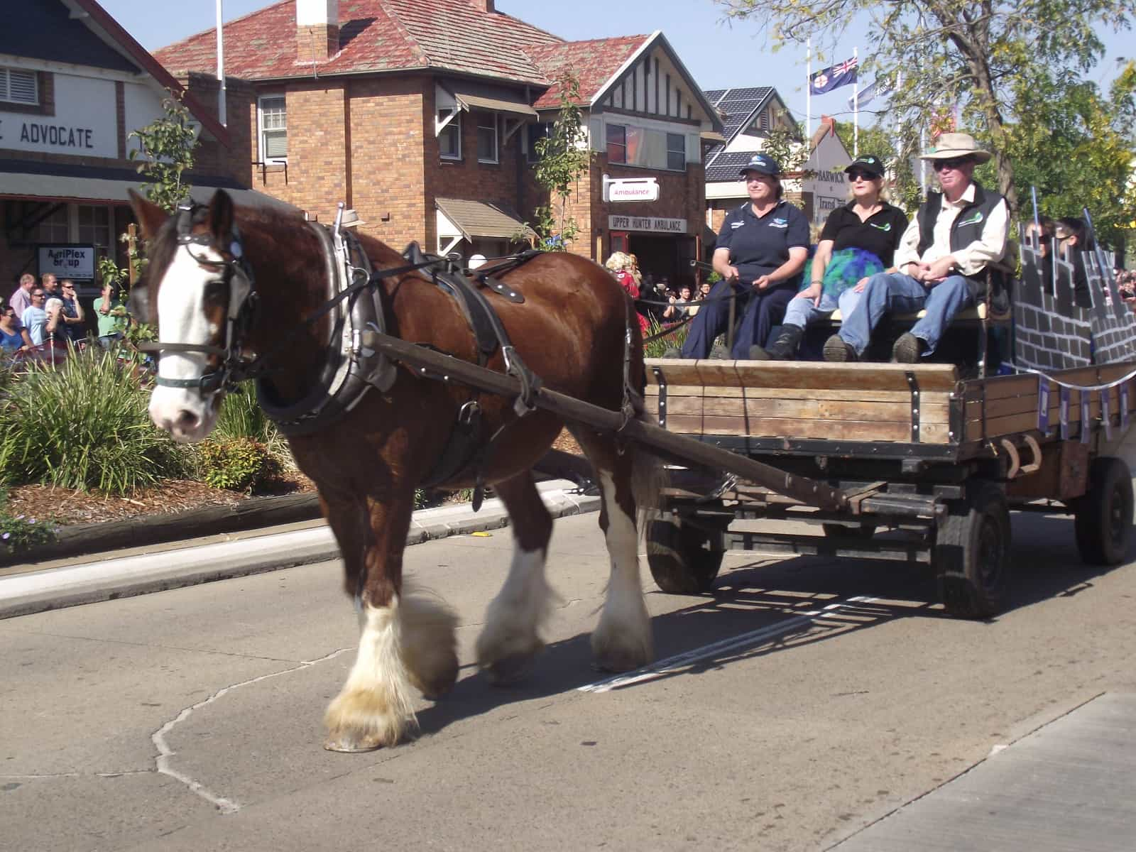 How much weight can a Clydesdale carry