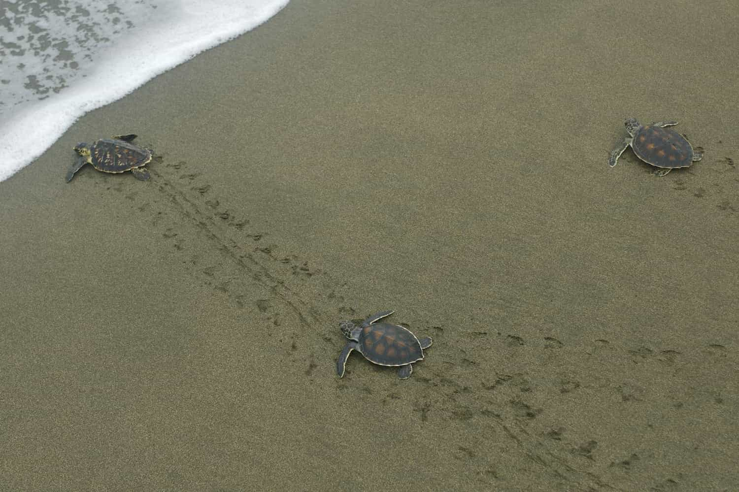 Best Time to See Turtles in Kauai