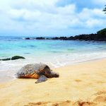 Best Time & Place to See Turtles in Oahu - Laniakea Beach