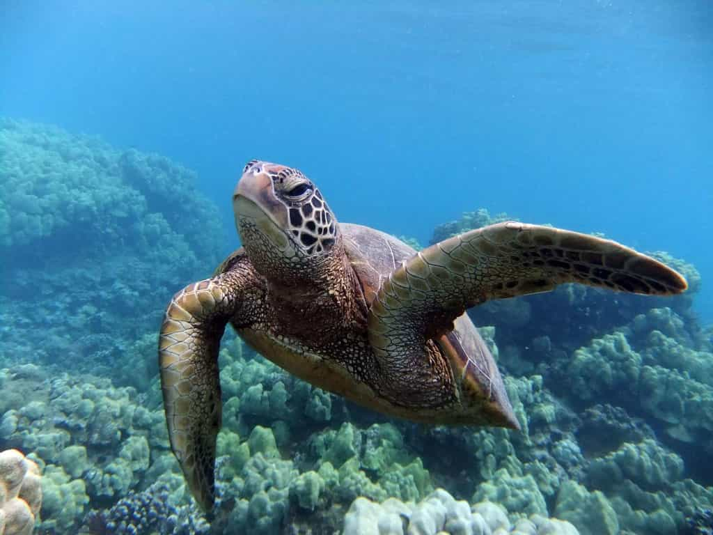 Best Place to See Turtles inMaui