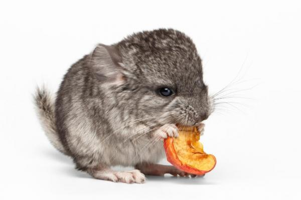 What does Chinchilla Eat