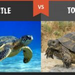 Differences_Between_Turtles_and_Tortoises