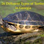 Types of turtles in georgia