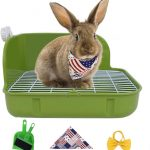 How to Potty Train a Rabbit