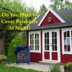 Do you have to cover parakeet cage at night?