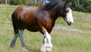 Most Gentle Horse Breed