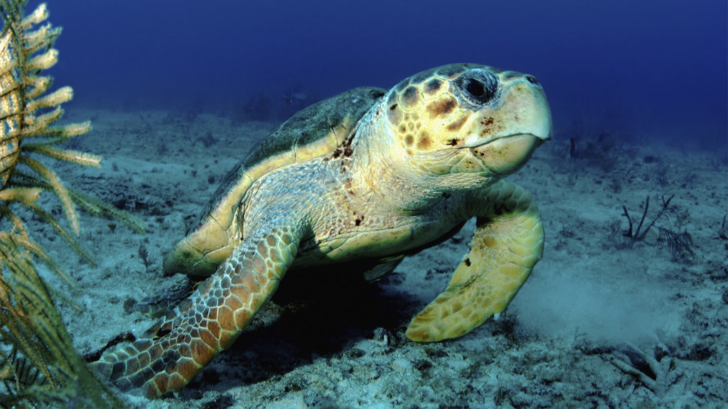How Do Turtles Breathe Underwater In The Winter?