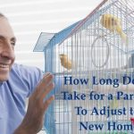 How Long Does it Take for a Parakeet to Adjust to a New Home?