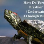 How do turtles breathe?