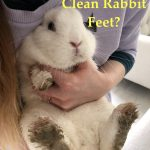 How to Clean Rabbits Feet?