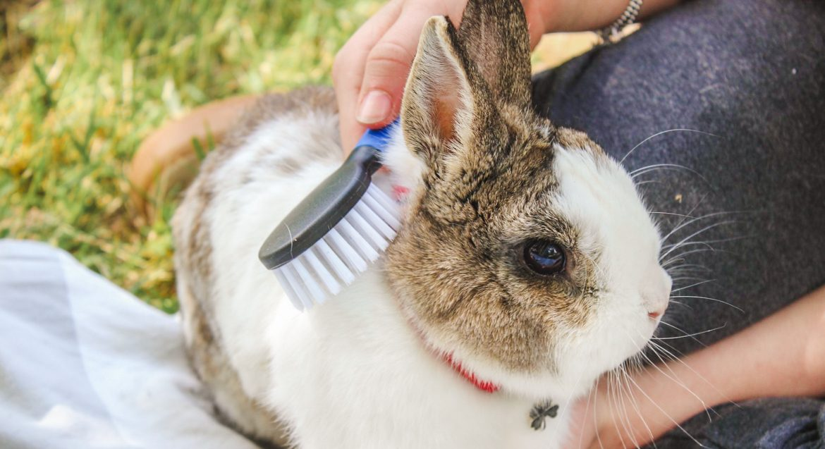 How to clean rabbit fur