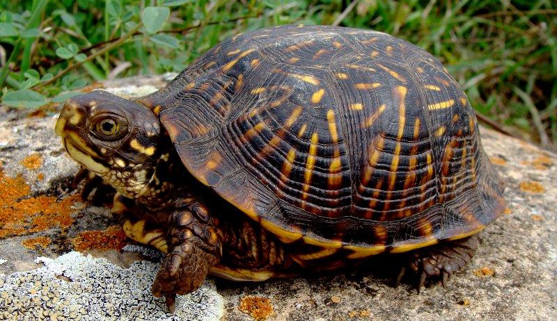 Turtle Basking in Sun