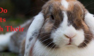 Why Do Rabbits Twitch Nose