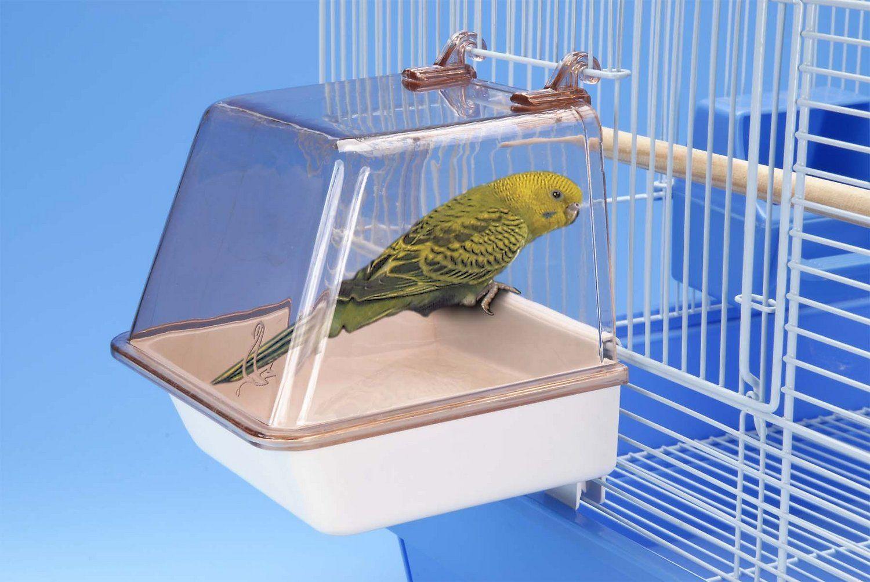 budgie in bird bath