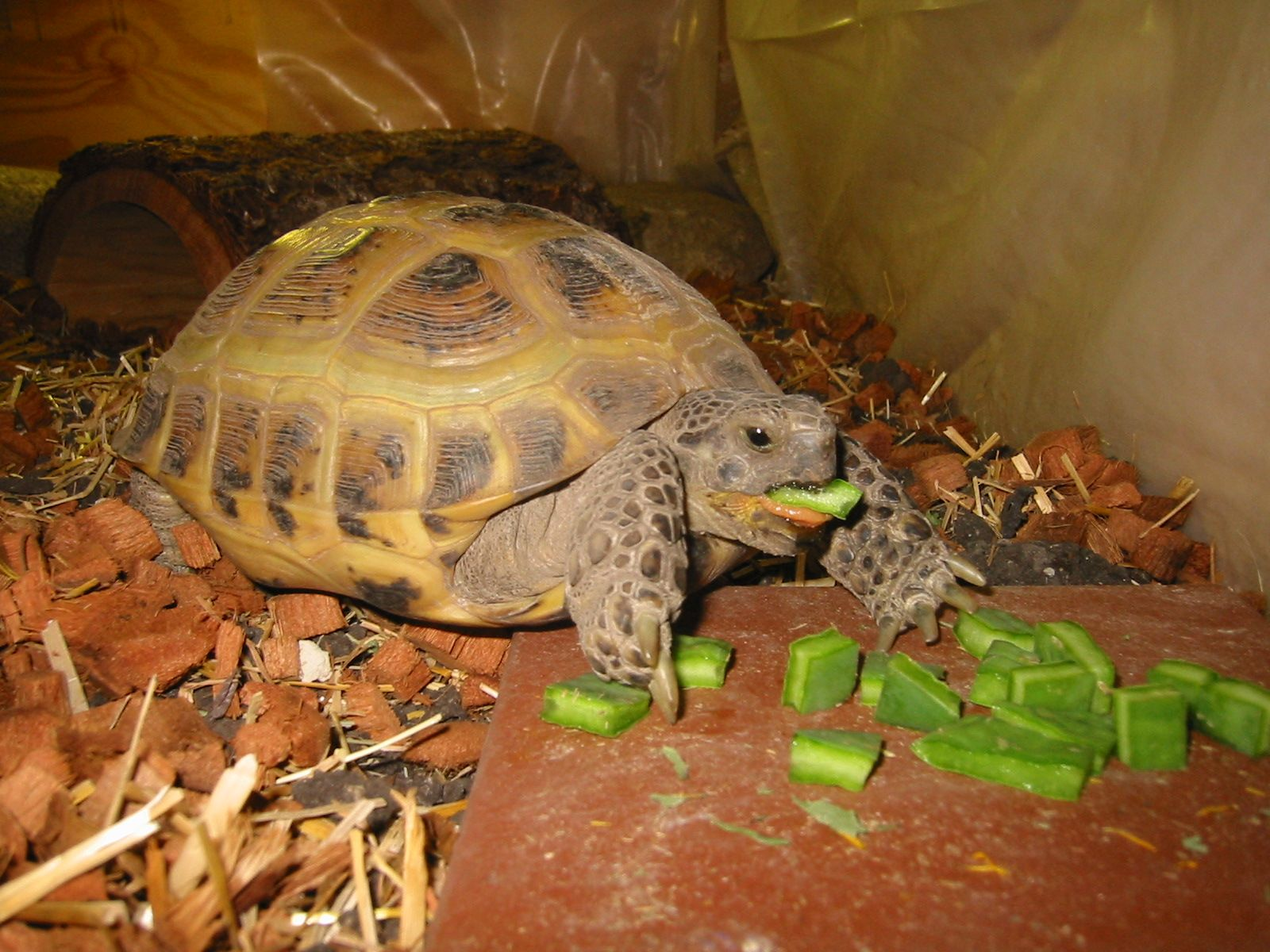feeding the turtle with healthy food