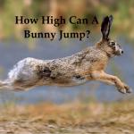 how-high-can-bunny-jump