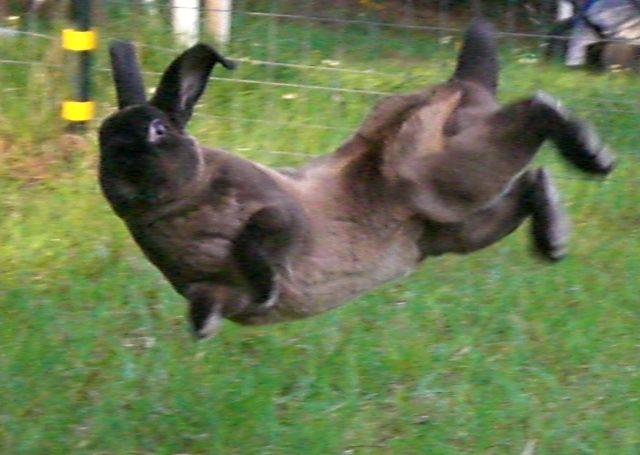 rabbit binky