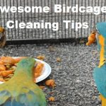 How to Keep Area Around the Bird Cage Clean