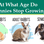 When Do Rabbits Stop Growing