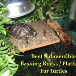 pet-turtle-basking-platform
