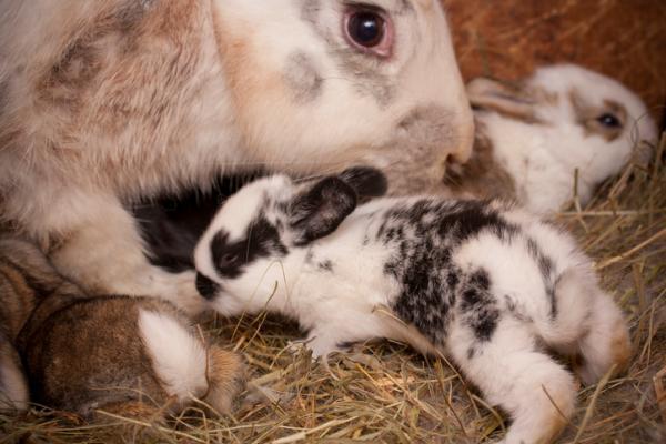 rabbit delivered kits