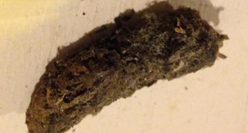 Skunk Poop