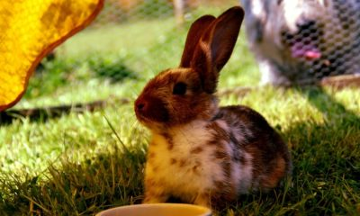 why do rabbits thump in hutch