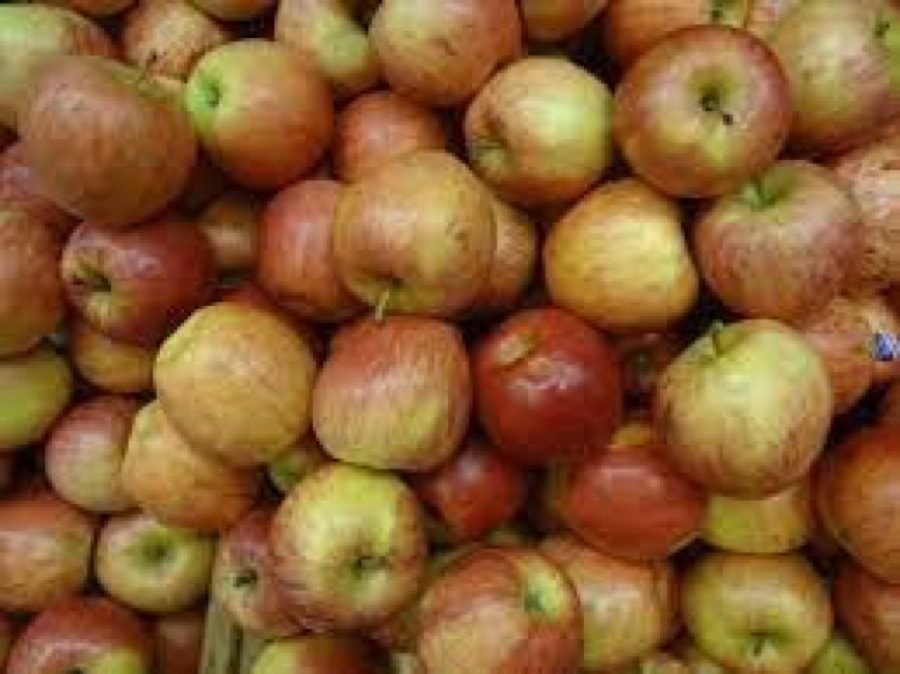 how many apples can horse eat in a day?