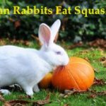 Health Benefits from Squash for Rabbit