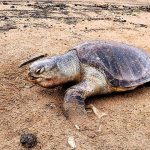 What Does a Dead Turtle Look Like